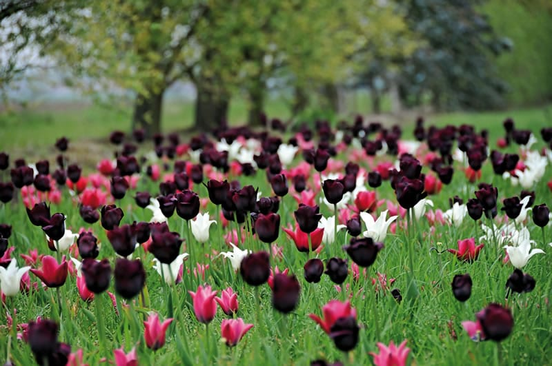 bloebollen 013