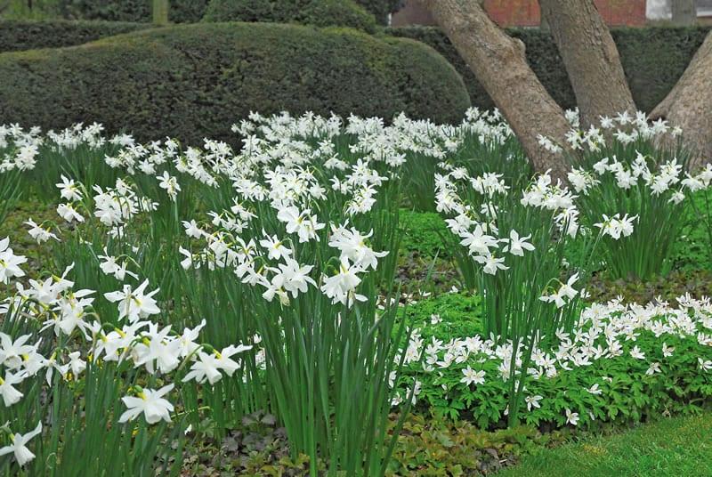 bloebollen 022
