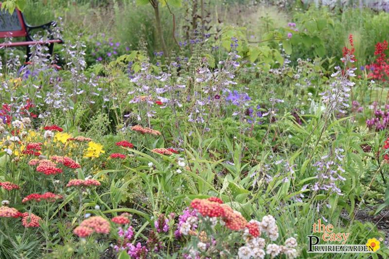20150615 Prairie show tuin Lageschaar Smaragd (2)_edited-1