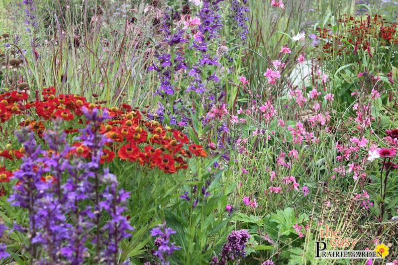 20150810 Prairie show tuin Lageschaar Garnet (2)_edited-1