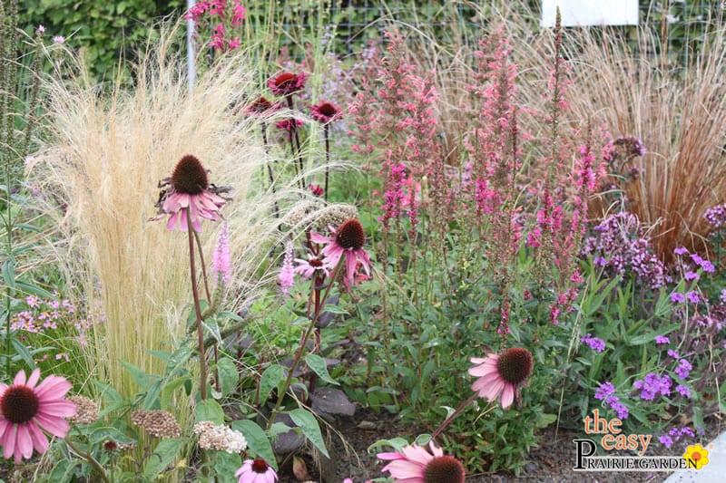 20150810 Prairie show tuin Lageschaar Spinel (2)_edited-1
