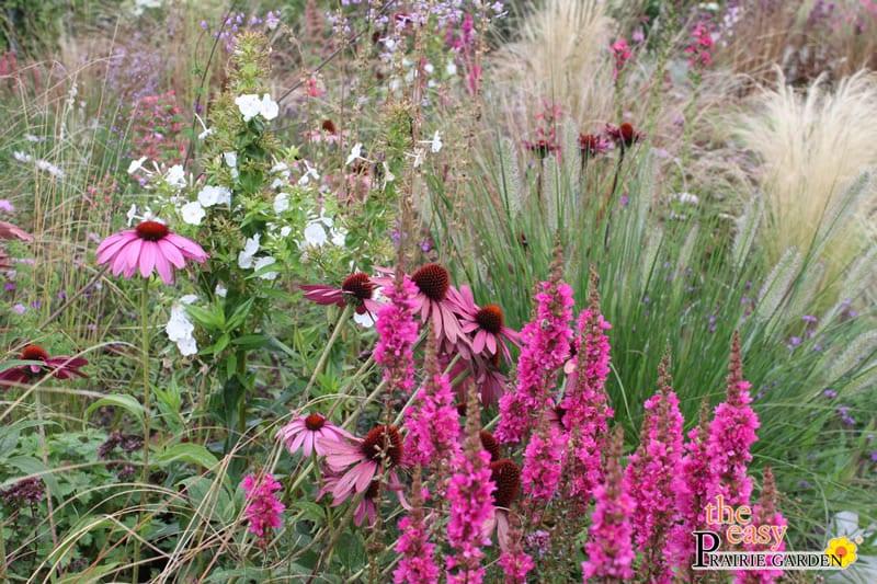 20150810 Prairie show tuin Lageschaar Spinel (4)_edited-1