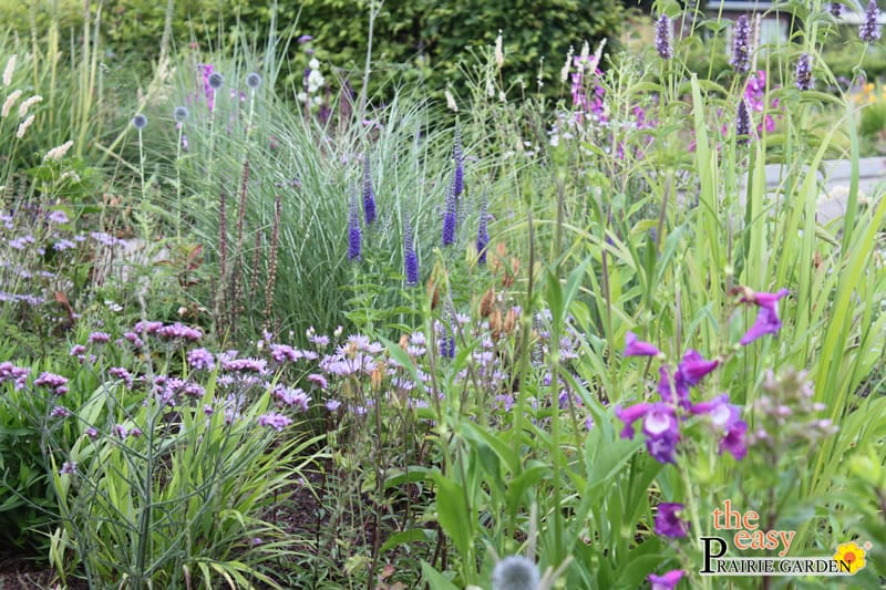 20150812 Prairie show tuin Lageschaar Amethyst (3)_edited-1