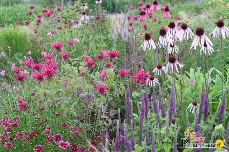 20150812 Prairie show tuin Lageschaar Garnet (4)_edited-1